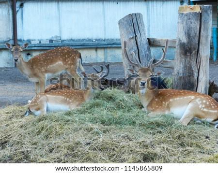 Three dear on the grass #1145865809