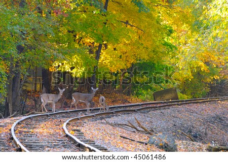 Three deer on an old railroad track