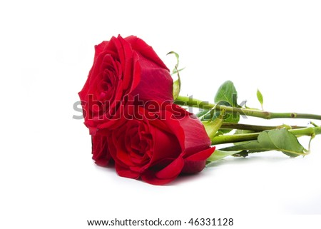 three delicious roses isolated over white