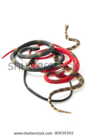 Three different kindf of snakes isolated over white