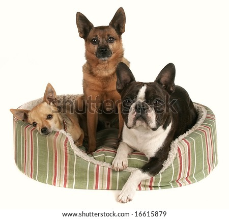three dog friends in a pet bed