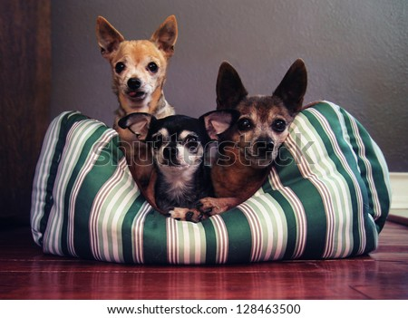 three dog pals in a dog bed together