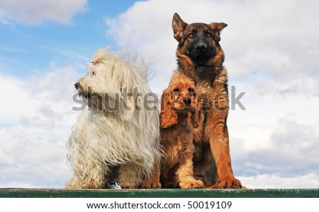three dogs and puppies sitting on a table