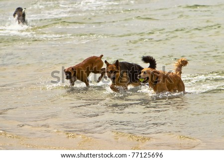 Three dogs of different breeds playing together in the ocean