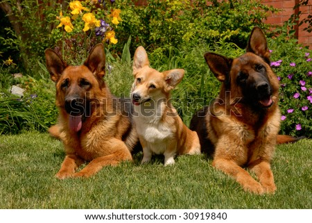 Three dogs on the grass