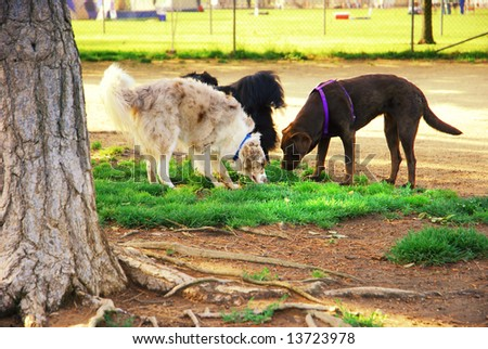 Three dogs playing near a tree at a dog park