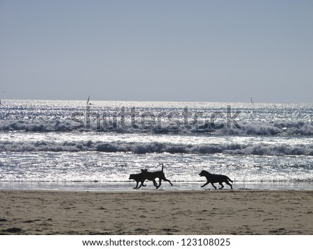 Three dogs running at the beach. - stock photo