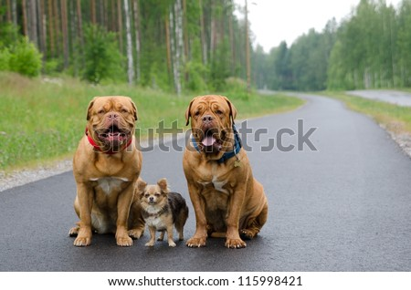 Three dogs sitting on a road in a forest