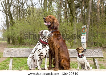Three dogs sitting on a wooden bench in a park
