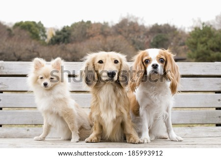 Three dogs sitting on bench