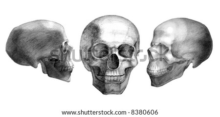Three drawn skulls