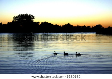 Three Duck Sunset