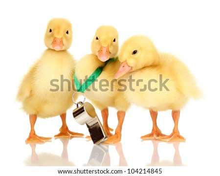 Three duckling and whistle isolated on white