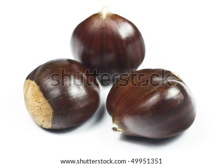 Three edible chestnuts (castanea sativa) isolated on white
