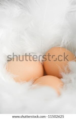 Three eggs in a nest made of white feathers. Shallow DOF for soft look, focus on the upper right egg.