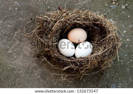 three eggs in bird's nest outdoors