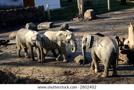 Three elephants standing together in their enclosure at ZOO Zlin - Czech