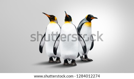 Three Emperor Penguins Isolated On Gray Background. Penguins Are In A Row