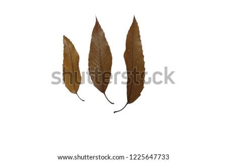 three fallen leaves #1225647733