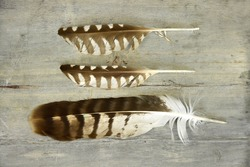 three feathers on a empty old grey wooden background