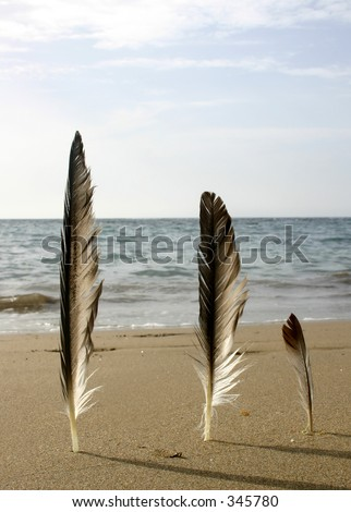 Three feathers on the Beach
