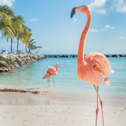 Three flamingos on the beach
