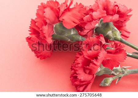 Three flower, red carnations on red background. Holiday background. Greeting card.