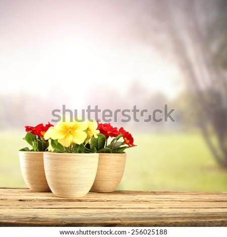 three flowers on desk space