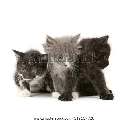 Three fluffy kittens  isolated on white background