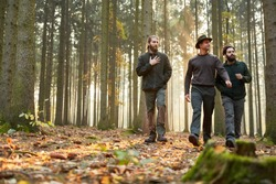 Three foresters go together in the evening through a forest