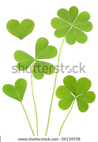 three & four leaf Clovers