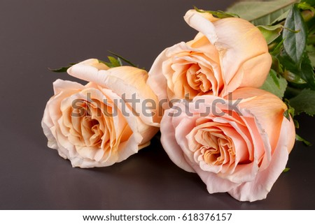 three fresh beige roses on a dark wooden background #618376157