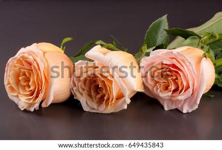 three fresh beige roses on a dark wooden background #649435843