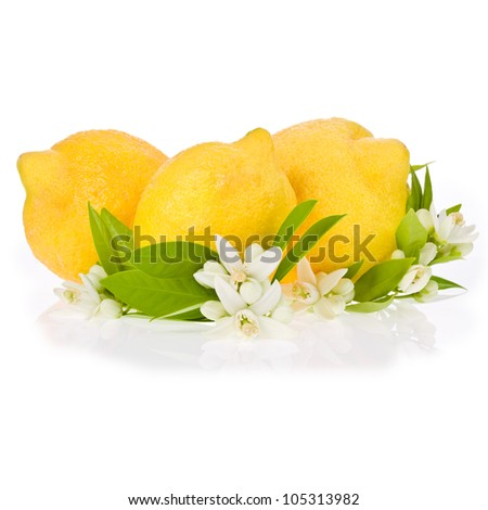 three fresh lemons with leaves and flowers isolated on white background
