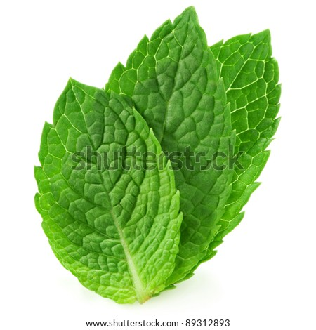 three fresh mint leaves isolated on white background. Studio macro - stock photo