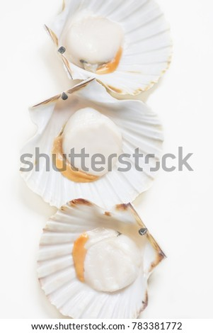 Three fresh  scallops isolated on white background. Fresh Seafood Market
