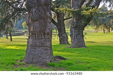 three giants secular witches trees in a park