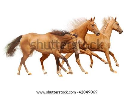 three golden horses on white