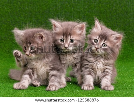 Three gray kittens on artificial green grass