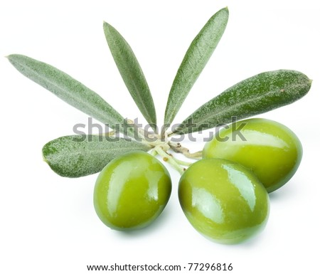 Three green olives on the branch. Object on a white background