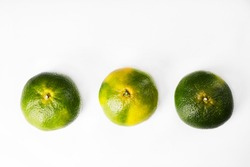Three green tangerines on a white background. The color of tangerines is yellow and green. New Year's fruit. Unripe tangerine. Fruit for the Christmas holidays.
