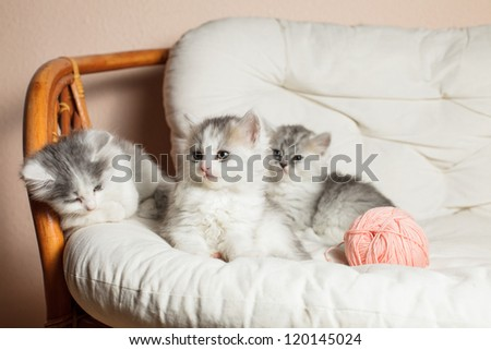 Three grey kittens on the white cushion with a pink a ball of yarn