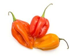 Three Habanero chili top view isolated on white background yellow orange red hot peppers