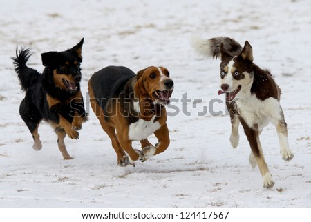 Three happy dogs at a Colorado off-leash dog park, winter.