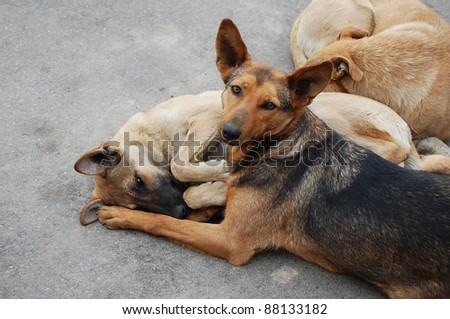 Three homeless dogs on the road - stock photo
