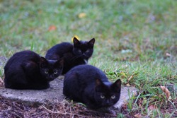 Three homeless little black cats sit on street and freeze