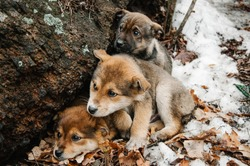 Three Homeless little frozen puppys with sad eyes, in the snow in forest near the old tree against background of winter. Waiting for warmth, good owner. New Year's 2018, Year Dog. Close up.