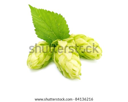 Three hop cone with leaf. Isolated on white.