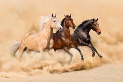 Three horse run in desert sand storm