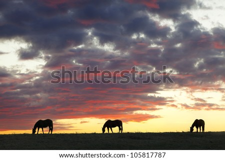 Three horses at sunset
